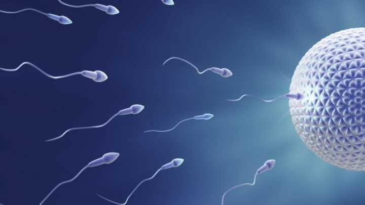 does human sperm have protein