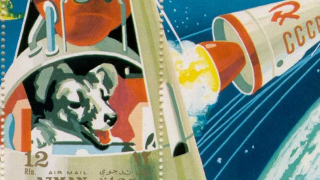 478 How Animal Astronauts Paved The Way For Human Space Flight