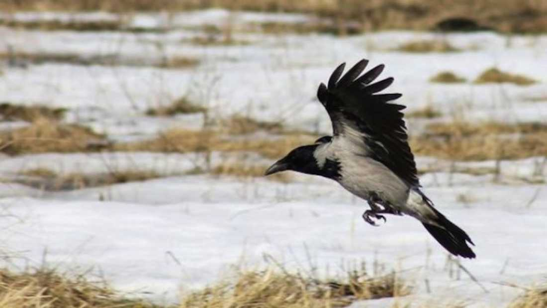 338 Crows Can Understand Analogies