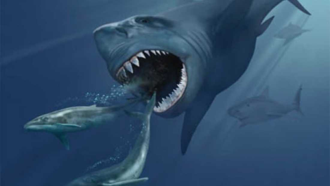 1358 Could Megalodon Still Live In The Deep Ocean?