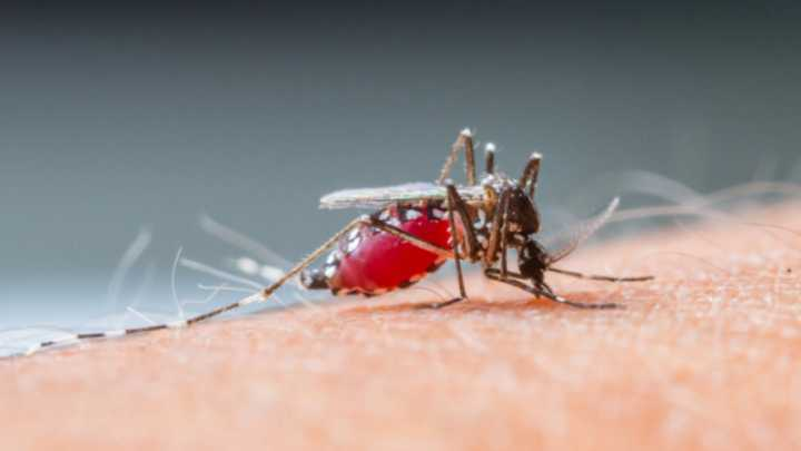 Drone That Traps Mosquitoes May Prevent Epidemics