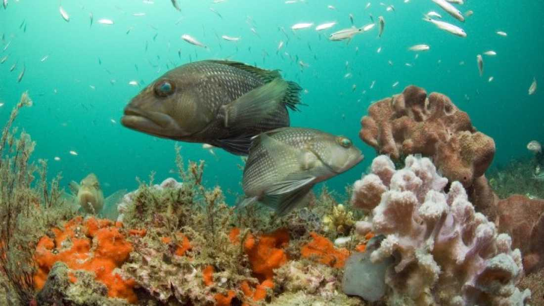 1189 American Public Can Now Nominate New National Marine Sanctuaries