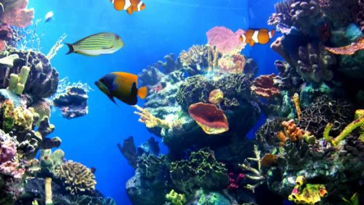 Image result for marine life