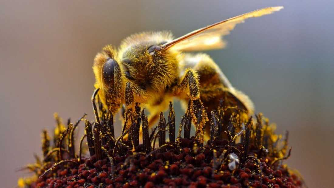 901 Study Claims Colony Collapse Disorder Caused By Insecticides