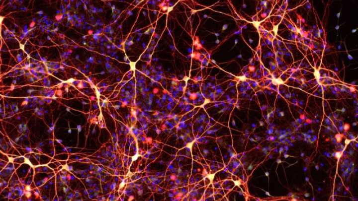 default scientists transform skin cells into beating heart tissue and brain