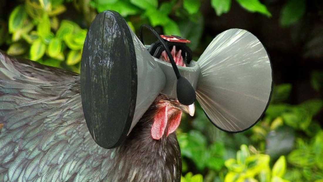 984 These Virtual Reality Headsets Make Farmed Chickens Believe They Roam Free