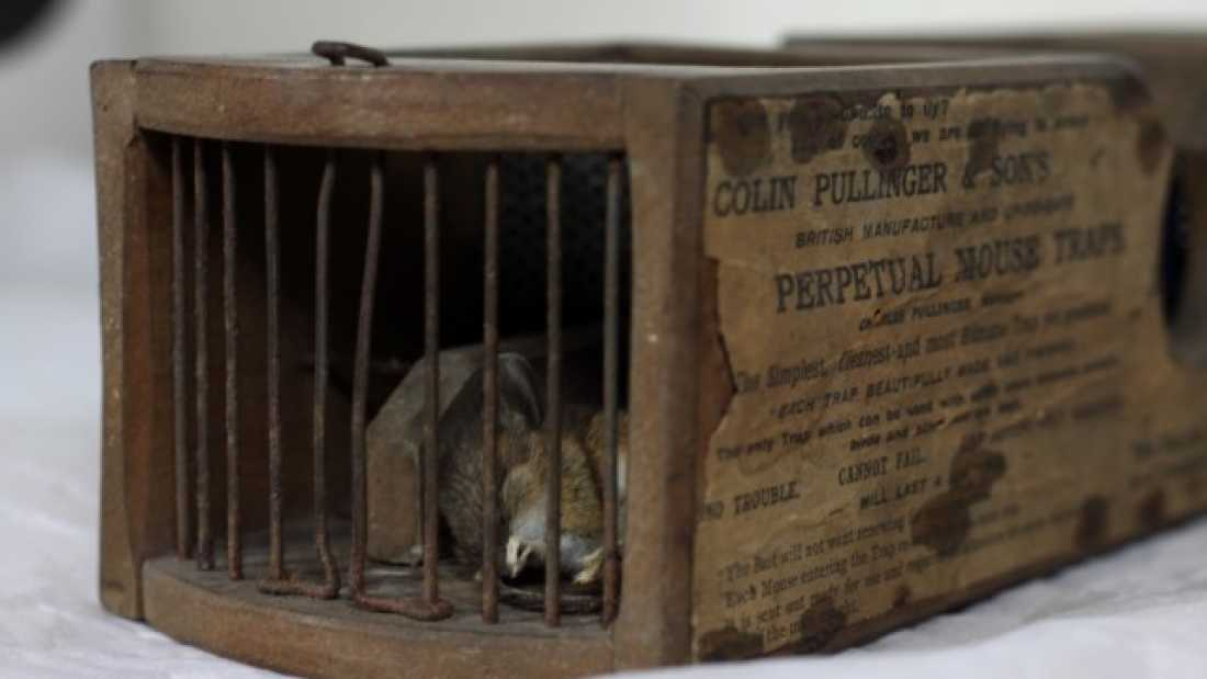 1116 Mouse Caught In 150-Year-Old Mousetrap At Museum
