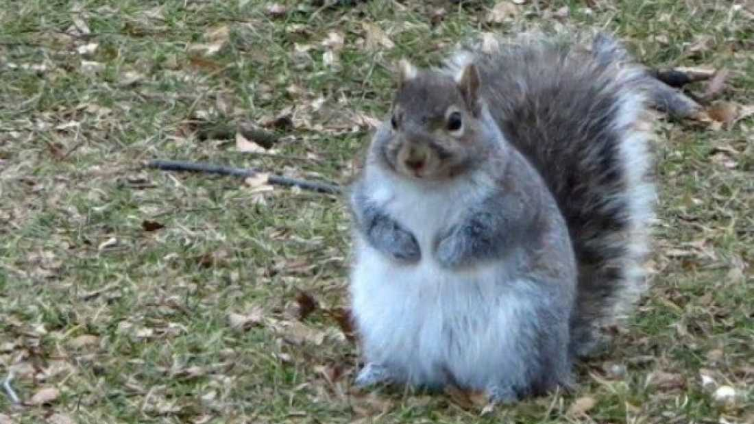 496 Squirrels Are Getting Seriously Tubby From The Warm Winter Weather
