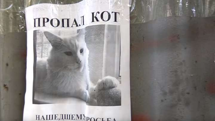 This Missing Cat Poster Optical Illusion Is Perfectly Sinister