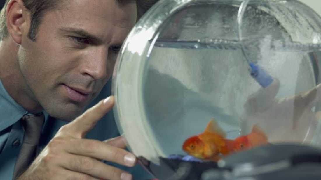 347 Is Technology Making Your Attention Span Shorter Than A Goldfish's?