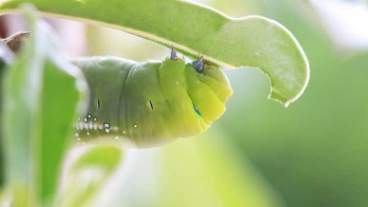 Call From A Different Number >> How Plants Respond To Damage Is Dependent On The Type of Insect Harming It | IFLScience