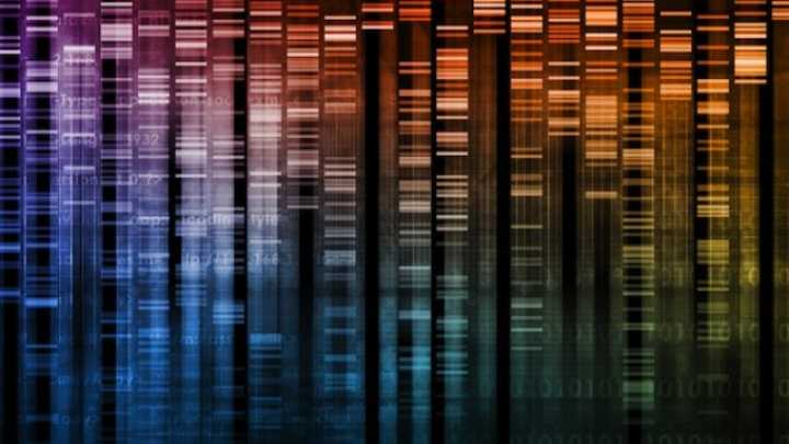Researchers Discover Extra DNA Base