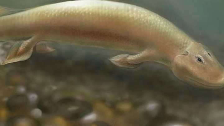 University Of Medicine And Health Sciences >> Fossils reveal how fish made transition from water to land ...