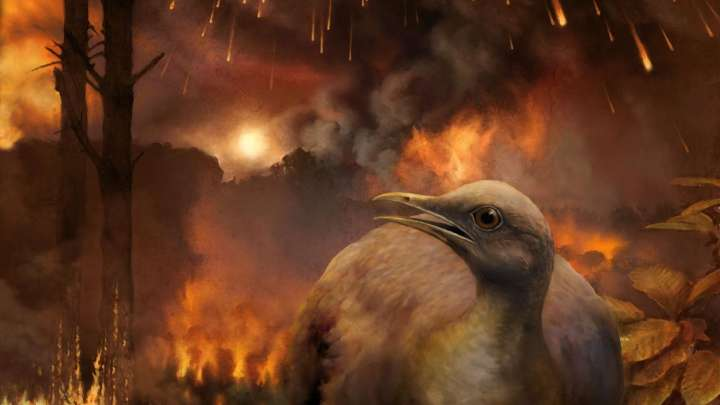 How Birds Survived The Deadly Asteroid That Took Out The Dinosaurs