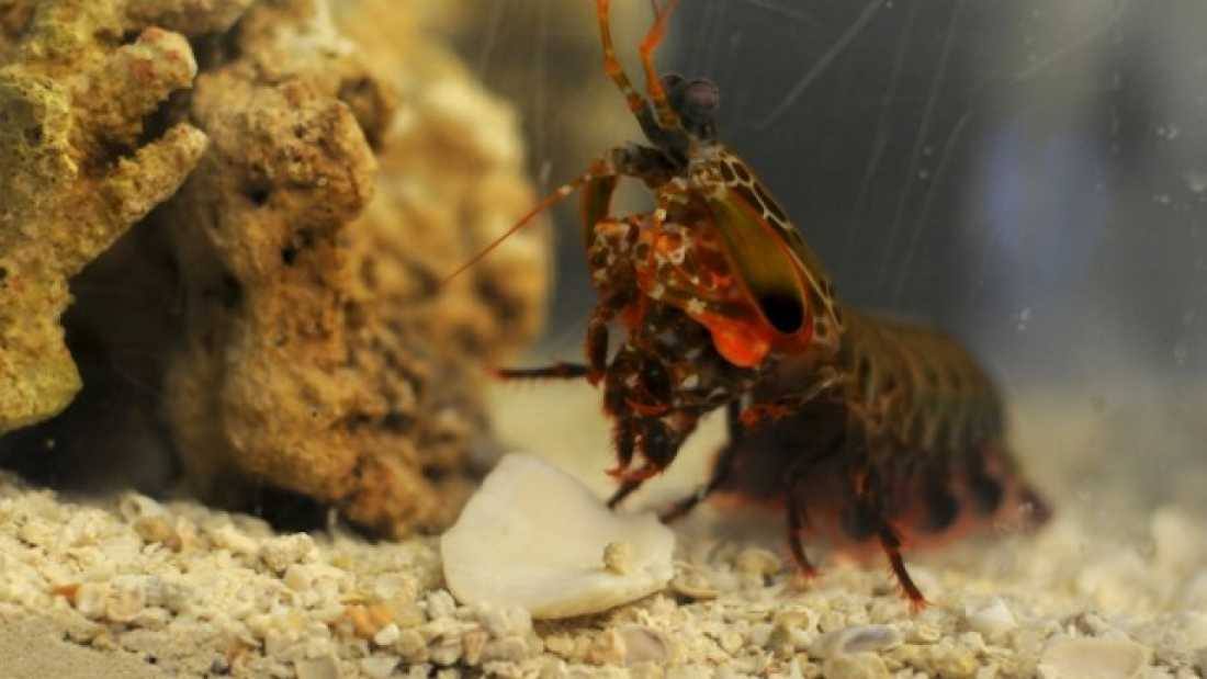 749 Mantis Shrimp-Inspired Material is Stronger than Airplanes