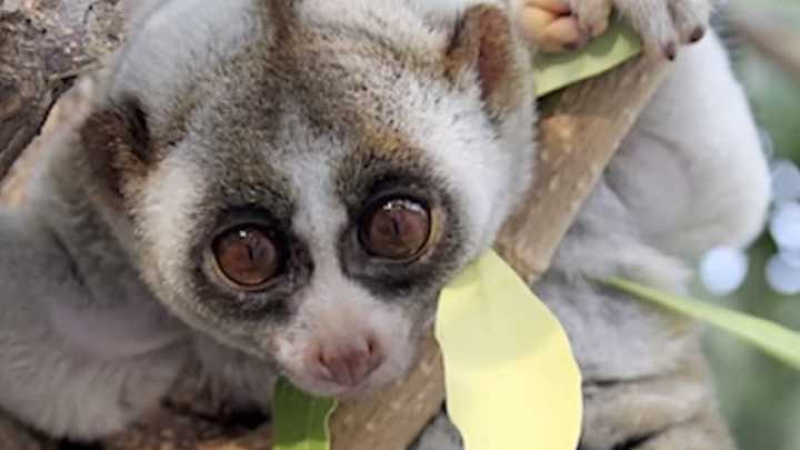 Top 10 Cute Animals That Can Kill You | IFLScience