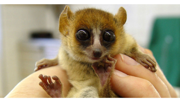 """plant and lemurs Extinct lemurs left behind plant 'orphans' """"for malagasy forests, our study connects the dots and shows that integrated forest protection and lemur conservation are required in order to."""