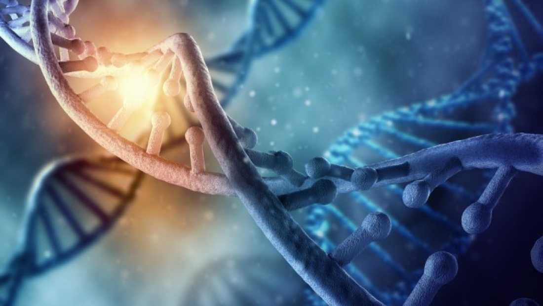 552 19 Pieces Of Non-Human DNA Found In Human Genome