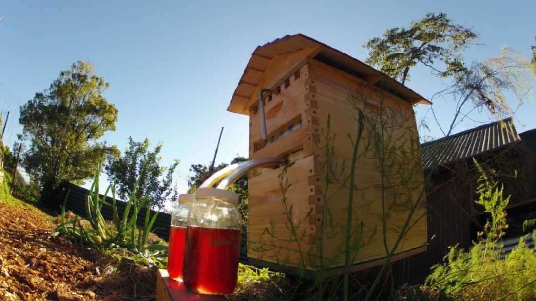 1082 New Beehive Lets Honey Be Harvested Without Disturbing Bees