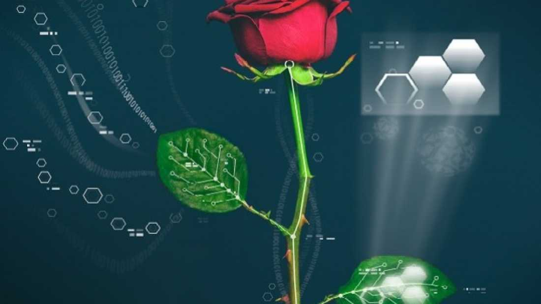 3856 Scientists Develop World's First Cyber Plant