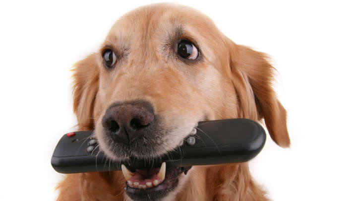 Can Dogs See Tv Screens