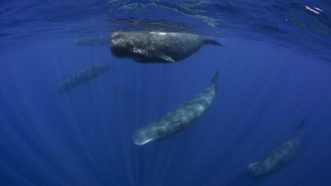 669 Post-Mortem On Thirteen Beached Sperm Whales Found Their Stomachs Full Of Plastic