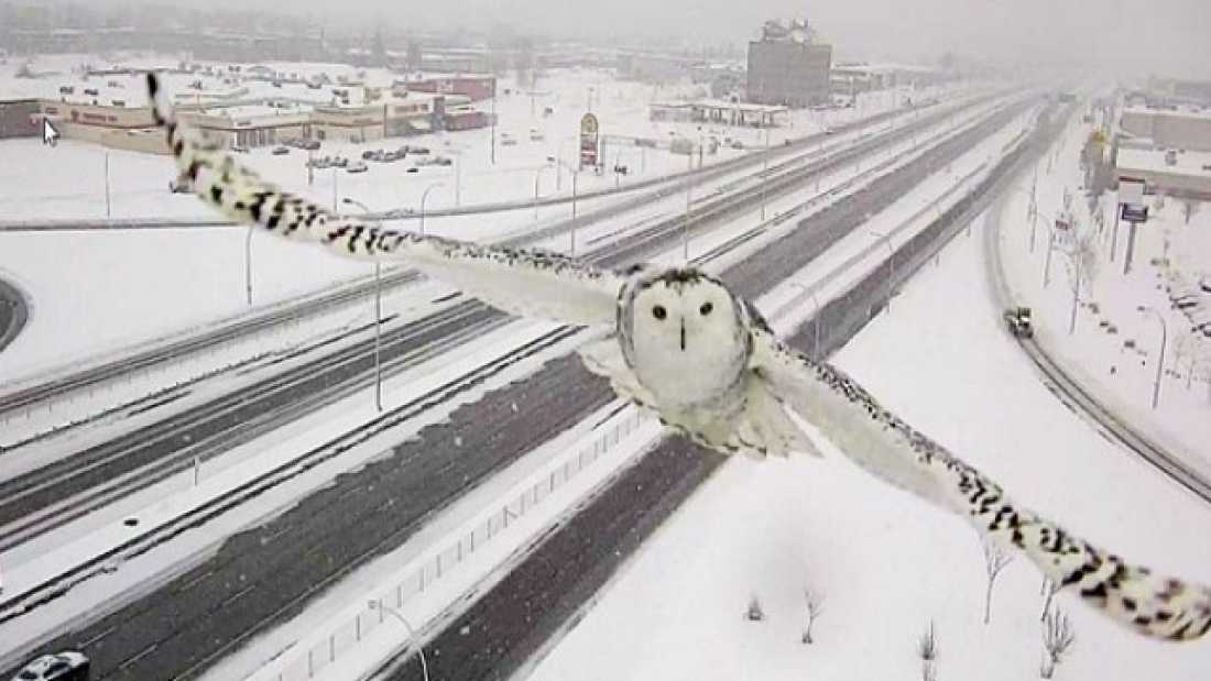 548 Ridiculously Photogenic Owl Caught On Traffic Camera