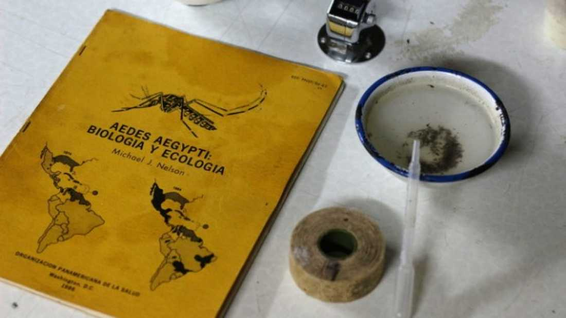 43 Zika: Aedes Aegypti Mosquitoes Love Biting Humans, And That's Why They Spread Viruses So Well