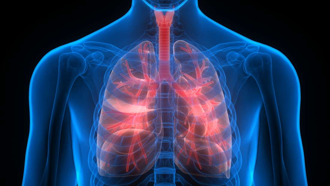 An Unexpected New Lung Function Has Been Found - They Make Blood ...