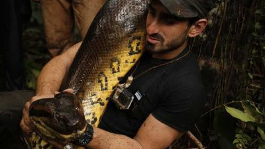 201 Man Fails To Get 'Eaten Alive' By Anaconda
