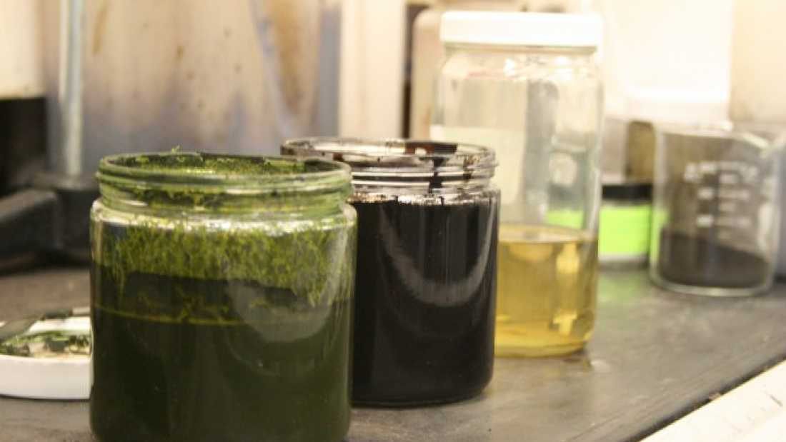 205 New process converts algae to crude oil in less than an hour