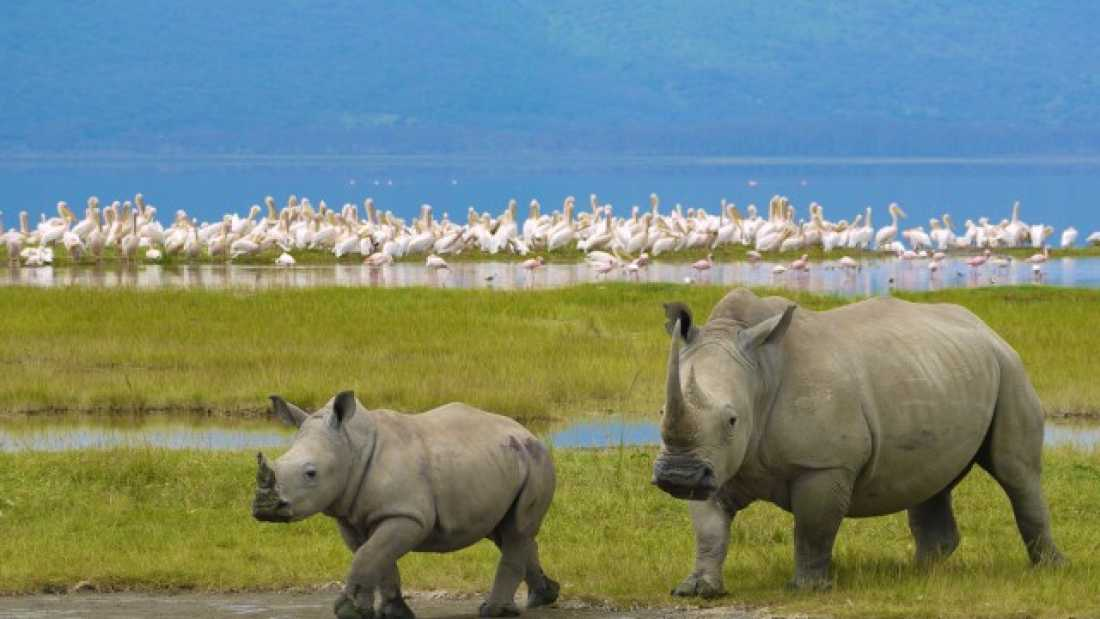 826 Rhino Poaching In South Africa Decreased For The First Time In A Decade