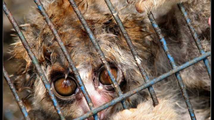 exotic pet trade Gofigure takes a look at lions, tigers, bears and other wild creatures that people have taken as so-called exotic pets, and the dangers involved.