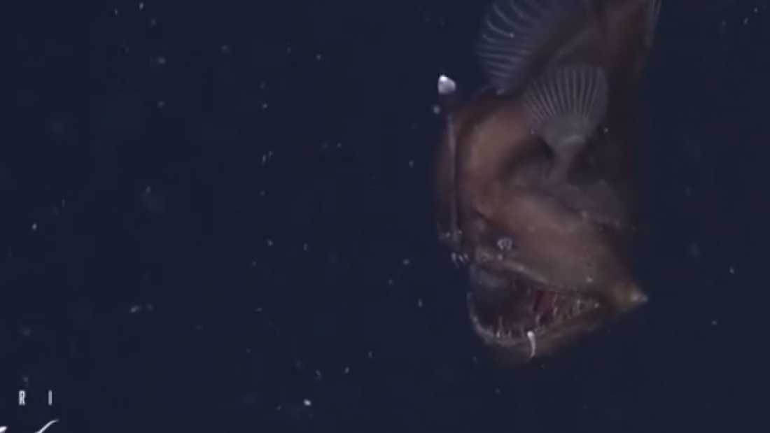 95 First Ever Footage Of Terrifying Deep-Sea Animal