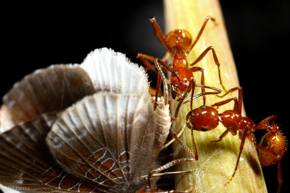 content-1466168224-11-butterfly-ants-abd
