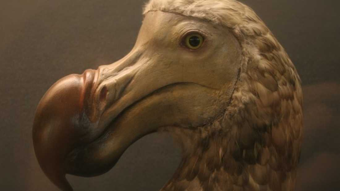 2011 Current Extinction Rate 10 Times Worse Than Previously Thought