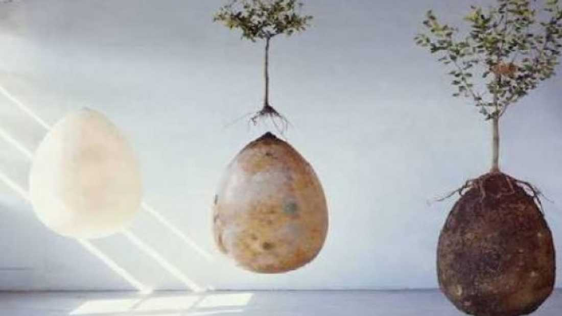 1106 Burial Pods Could Turn Cemeteries Into Forests