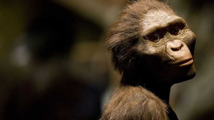'Lucy' May Have Lived Alongside Several Of Her Evolutionary Cousins In Ancient Africa