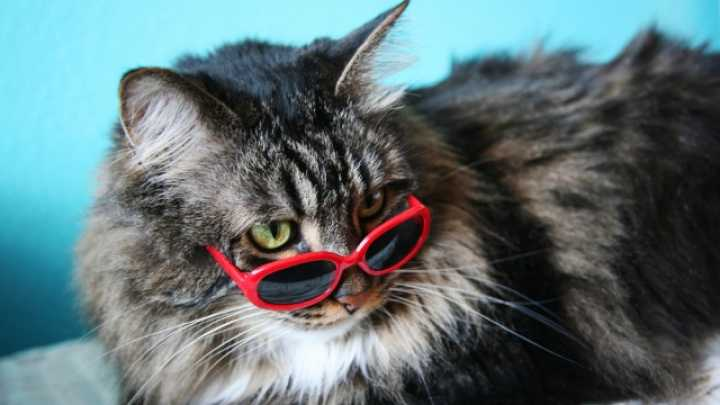 A Scientist Explains Why Your Cat Is So Weird Iflscience