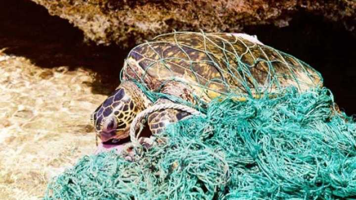 For Ocean Animals Death By Plastic Could Be Occurring More - These six pack rings feed sea creatures rather than harm them