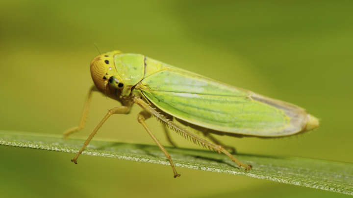 How One Insect's Camouflage Could Help Engineers Design A Cloak Of Invisibility