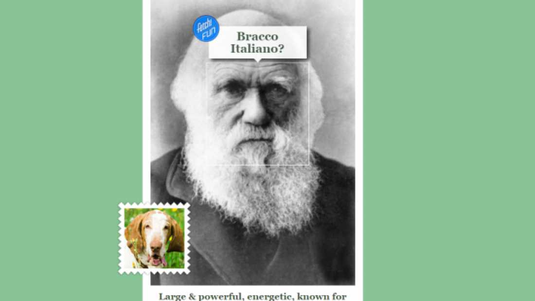 1303 Microsoft's New Tool Identifies What Dog Breed You Look Like