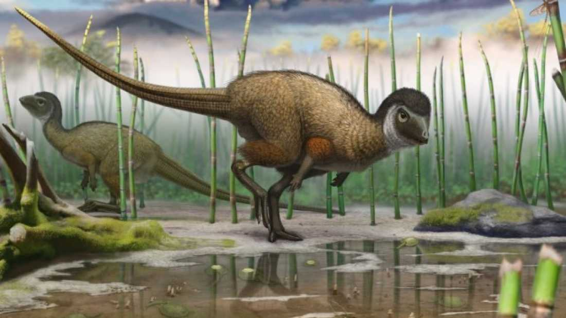 1592 Newly Discovered Fossils Hint That All Dinosaurs May Have Had Feathers
