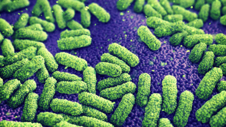 Woman In The US Dies After Infection From Bacteria Resistant To 26 Antibiotic Drugs