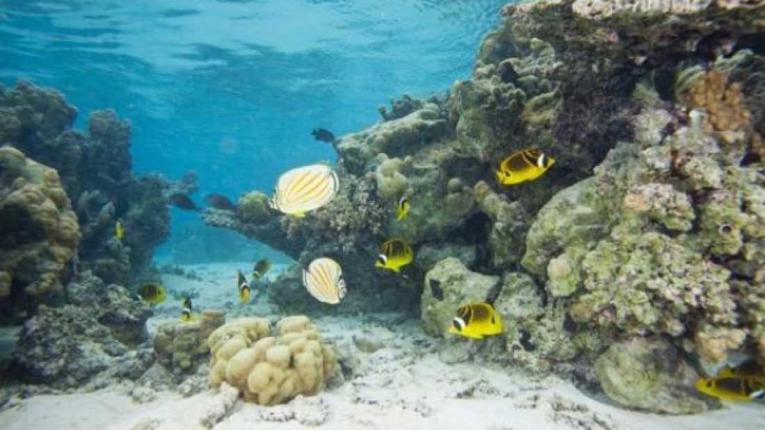 an analysis of the biomonitoring of coral reef health using butterflyfishes Biomonitoring is often  20 sites sampled using dredge analysis  corals and fish as indicators of the jardines de la reina coral reef health,.