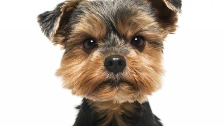 dogs will snub people who are mean to their owners | iflscience