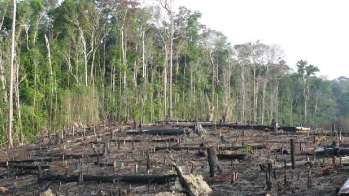 """natural environment is it being destroyed 777 quotes have been tagged as environment: mahatma gandhi: 'earth provides   in the thinking of the human being a hundred years is a long time  """"to waste,  to destroy our natural resources, to skin and exhaust the land instead of using."""