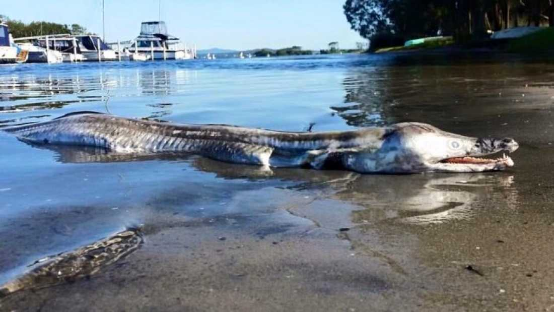 1370 Bizarre 'Sea Monster' Washes Up In Australia