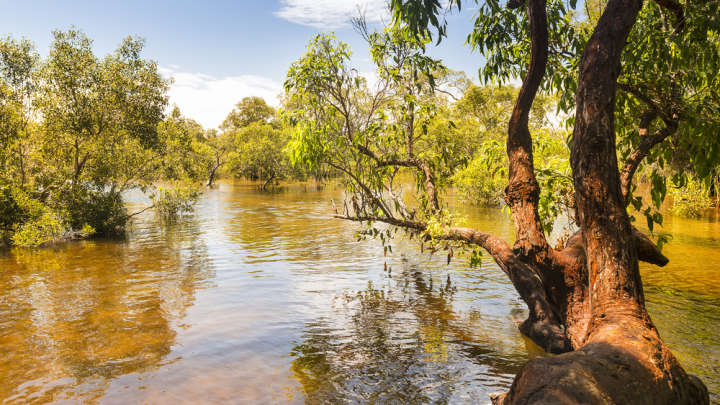 Ancient Wetlands Reveal How Australia's Water-Loving Creatures Survived The Ice Age Drought