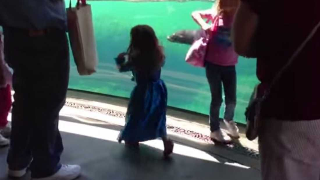 1289 Sea Lion Plays With Little Girl - But Watch What Happens When She Falls Down